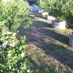 เทคนิคการปลูกมะนาวในบ่อซีเมนต์ (เกษตรกรก้าวหน้า)