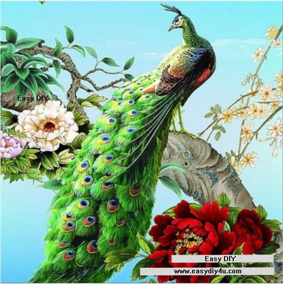 นกยูงแสนสวย