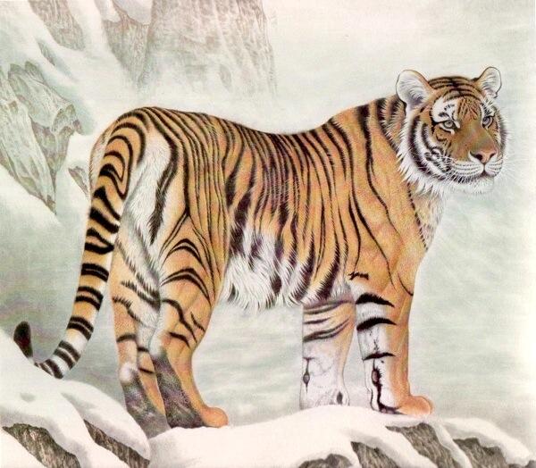 เสือโคร่งแสนสง่า