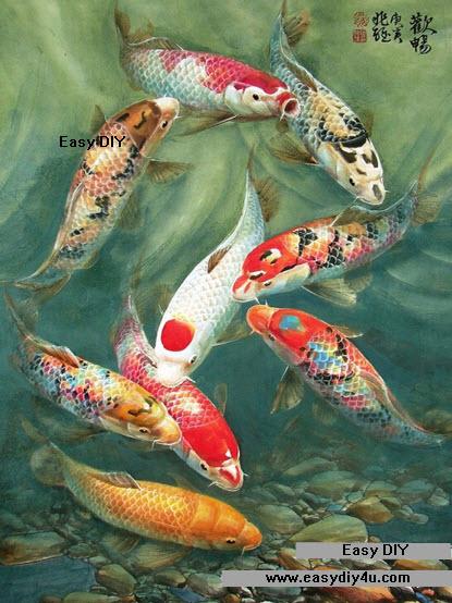 ปลาคราฟ 9 ตัวแหวกว่าย