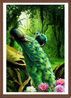 นกยูงคู่รักในป่าฝน