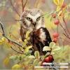 นกฮูกบนกิ่งไม้