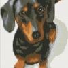 น้องหมาขี้อ้อน สุนัขพันธ์ดัชชุน (Dachshund)