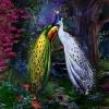 นกยูงคู่รัก