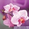 อุปกรณ์งานฝีมือ DIY ครอสติสคริสตัลรูปดอกกล้วยไม้ orchid 2