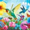 สีสันของนกและแมลง