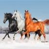 ม้าสามตัว