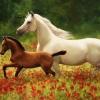 ม้าแม่ลูก