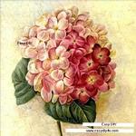 ภาพวาดดอกไฮเดรนเยีย