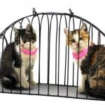 กรงอาบน้ำแมว