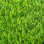 หญ้าเทียมสนามเด็กเล่น HD-388(1x2เมตร)