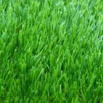 หญ้าเทียม GL-X425C Plus สีเขียวสด(1x2เมตร)