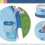 Intex Surface Skimmer ที่ดักสิ่งสกปรกบนผิวน้ำ 28000 thumbnail 2