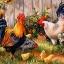 ครอบครัวไก่แจ้ thumbnail 1
