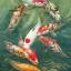 ปลาคราฟ 9 ตัวแหวกว่าย thumbnail 1