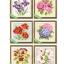 ดอกไม้แสนสวย (ภาพละ 300 บาท) thumbnail 2