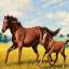 ม้าแม่ลูก 2 thumbnail 1
