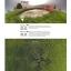 MJX Bugs 2 B2W WIFI FPV Brushless บินไกล 1 กิโลเมตร thumbnail 10