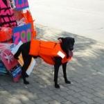 เสื้อชูชีพสุนัขราคาถูก รุ่น โมดิฟาย